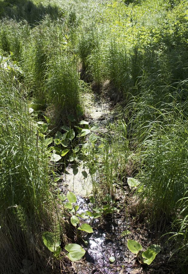 Old grown creek in the countryside. Old creek grown with green grass in sunlit summer countryside royalty free stock photography