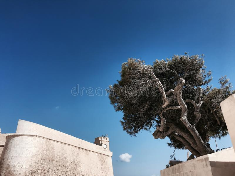 Old curved tree on the background of an ancient fortress stock photo