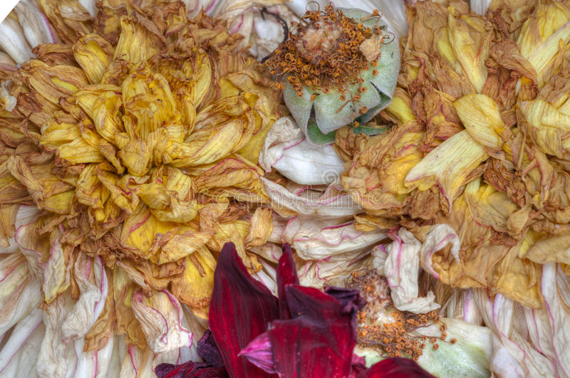 Old dead flowers. Close up macro royalty free stock photo