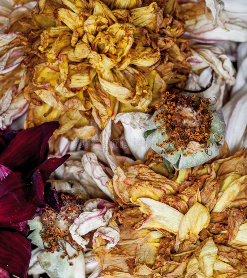 Old dead flowers. Close up macro stock images