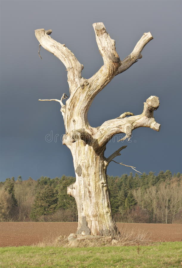 An Old Dead Tree. In the middle of a Farmers Field, with a Stormy Background stock images