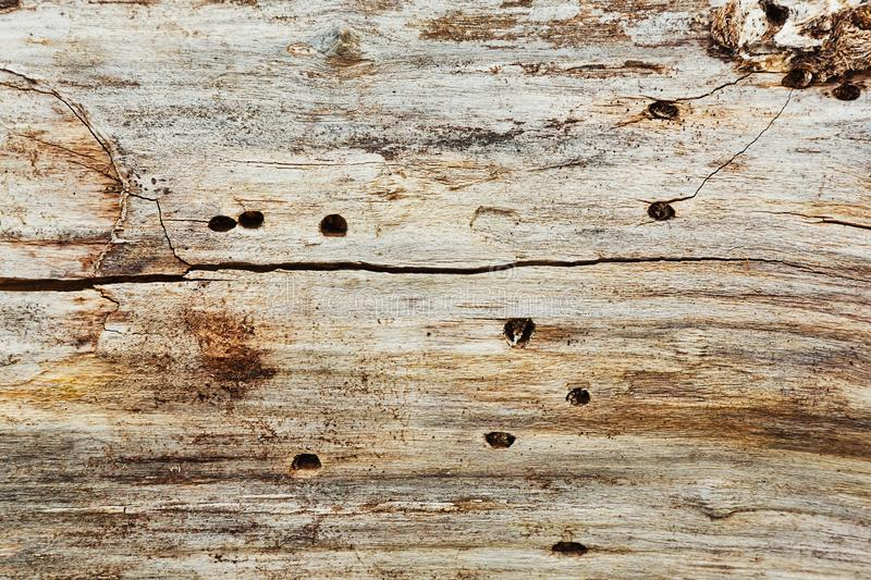 Old dead tree texture background royalty free stock photo