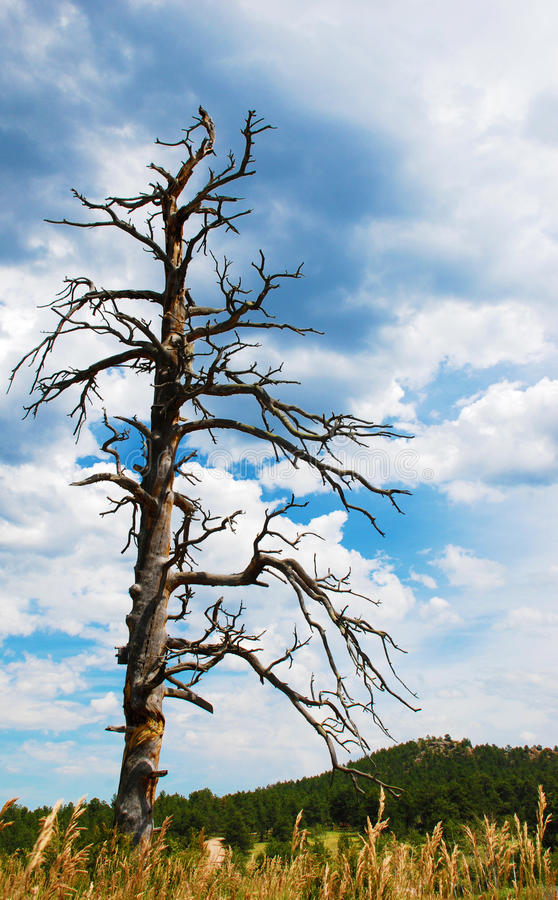 Download Old, Dead Tree Under A Stormy Sky Stock Image - Image: 10719171