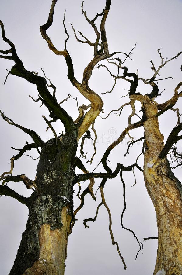 Dry trees nature disaster royalty free stock image