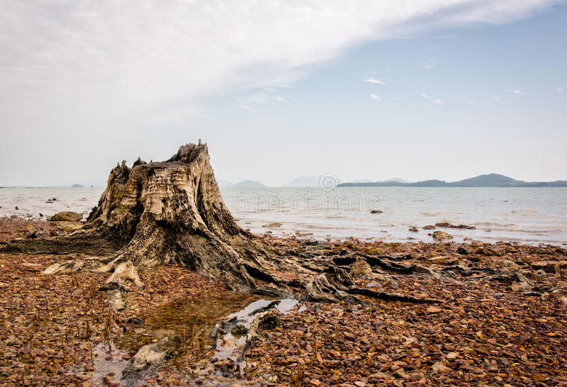 Old decayed stump at seaside with red stones stock image