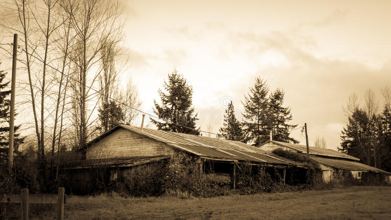 Old Dilapidated Barn Overgrown with Weeds. In the rural surroundings of Langley British Columbia. Black and White picture stock image