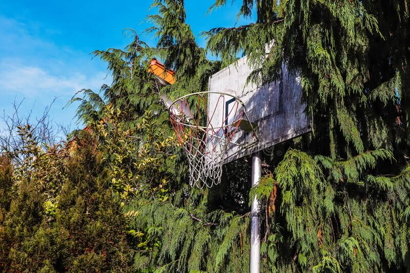 Old dirty backboard surrounded by trees under a blue sky and sunlight stock image