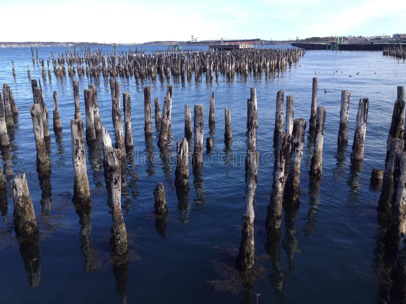 Old dock pilings stock photo image 62989309 for Dock pilings cost