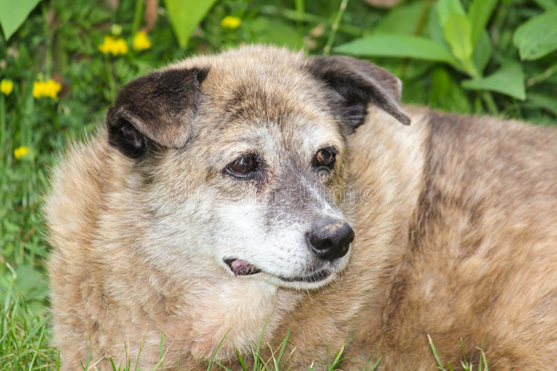 Old dog stock photography