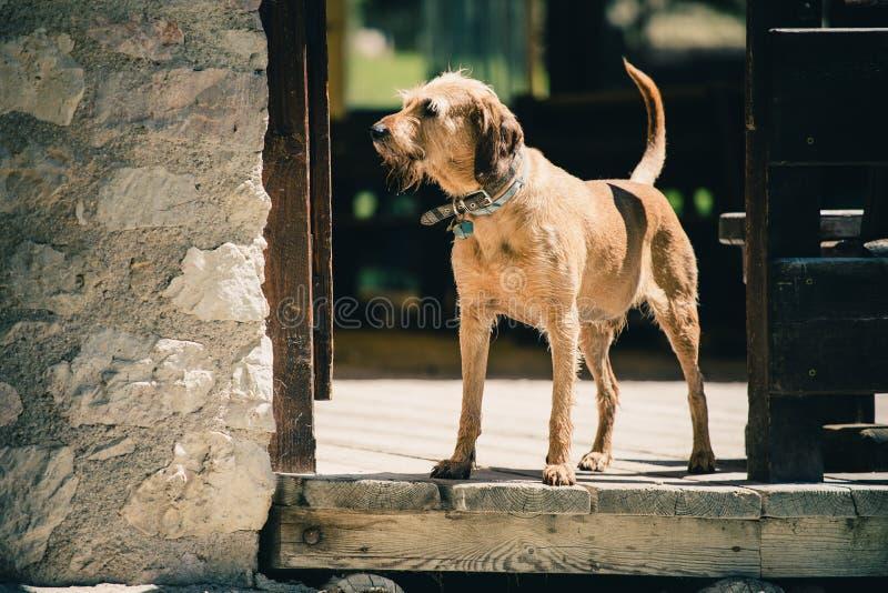 Old dog guarding in Lago Ghedina, an alpine lake in Cortina D`Ampezzo, Dolomites, Italy stock photos