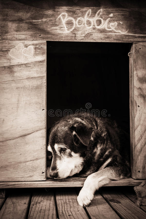 Old dog in kennel. Vertical format colour shot of old dog in kennel royalty free stock photos