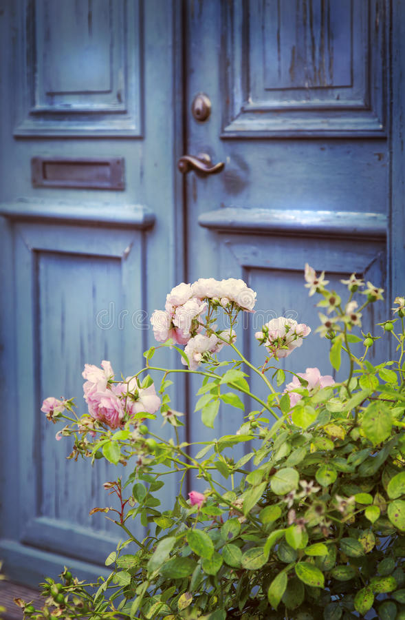 Old door and rosebush. Image of an old blue fron door with a rosebush stock image