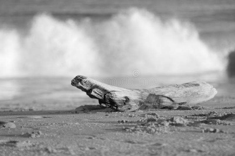Old driftwood on beach in the surf royalty free stock images
