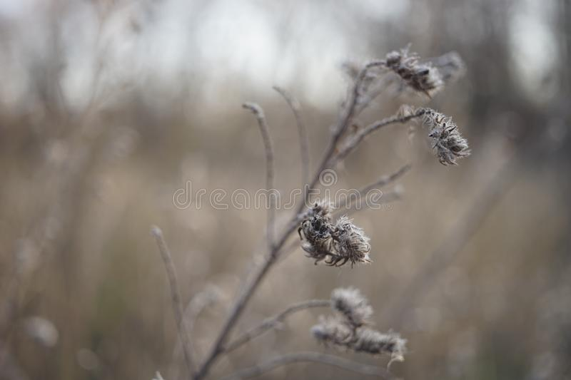 Old dry grass or flowers grow in autumn foggy field.  stock photo