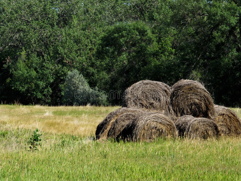 Old dry round hay bales