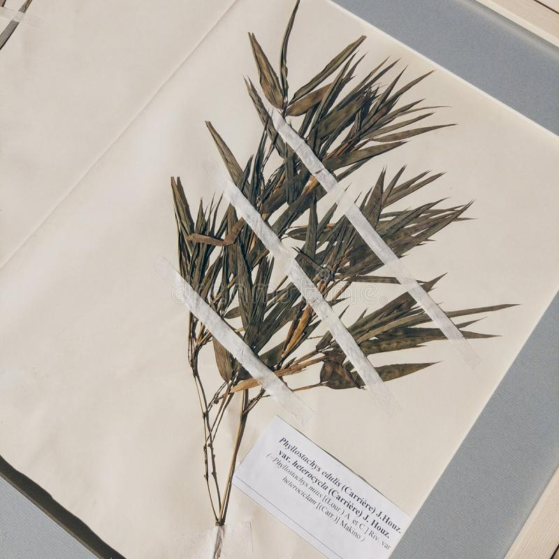 Open book with herbarium page. Old dry up herbs. royalty free stock images