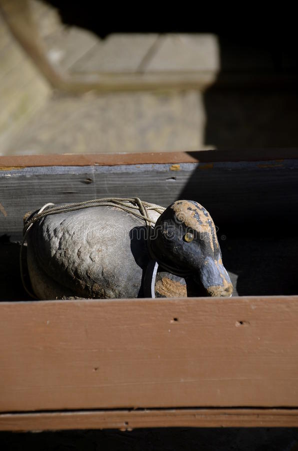 Old duck decoy. An old canvas layered duck mallard decoy peers out of an old wooden box royalty free stock photos