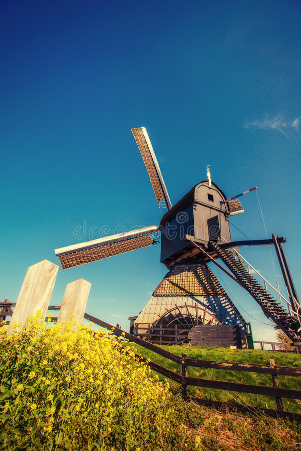 Old Dutch windmills spring from the canal in Rotterdam. Holland.  stock photos