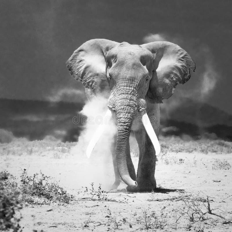 Old Elephant Stock Image