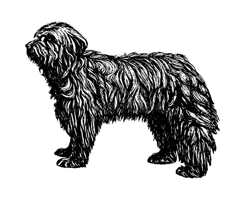 Old English Shepherd Bobtail dog vintage vector hand drawn illustration vector illustration