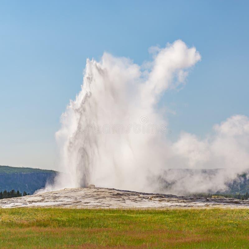 Old Faithful Geyser à Yellowstone, États-Unis image libre de droits