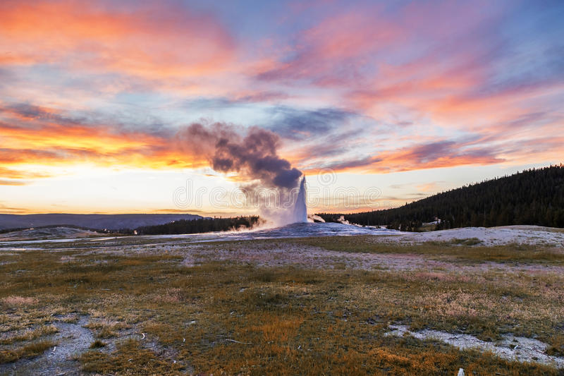 Old and faithful Geyser erupting at Yellowstone National Park. Beautiful sunset in the background of erupting old and faithful geyser. Old Faithful is a cone royalty free stock image