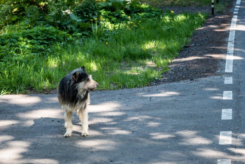 Old faithful shaggy dog. Big sad abandoned dog.  royalty free stock photos