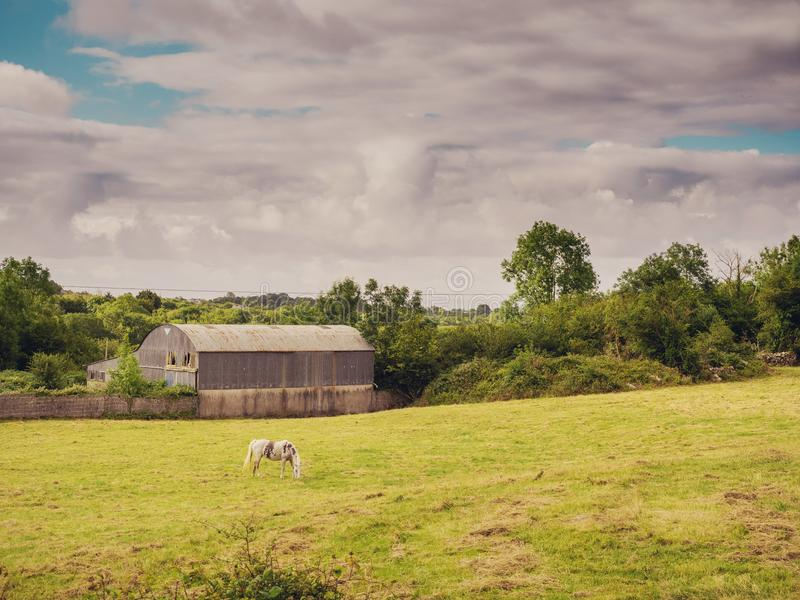 Old farm building with round metal roof, horse in a field, cloudy sky, Rural landscape. Old farm building with round metal roof, horse in a field, cloudy royalty free stock images