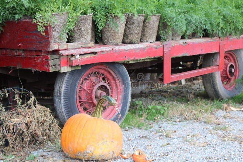 An old farm wagon and broken pumpkin royalty free stock photography