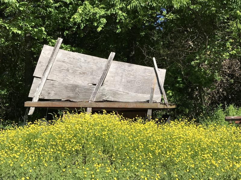 Old wagon hidden in nature. This is an old farm wagon hid in a field. I thought this way pretty with the flowers and weeds grown up royalty free stock photography
