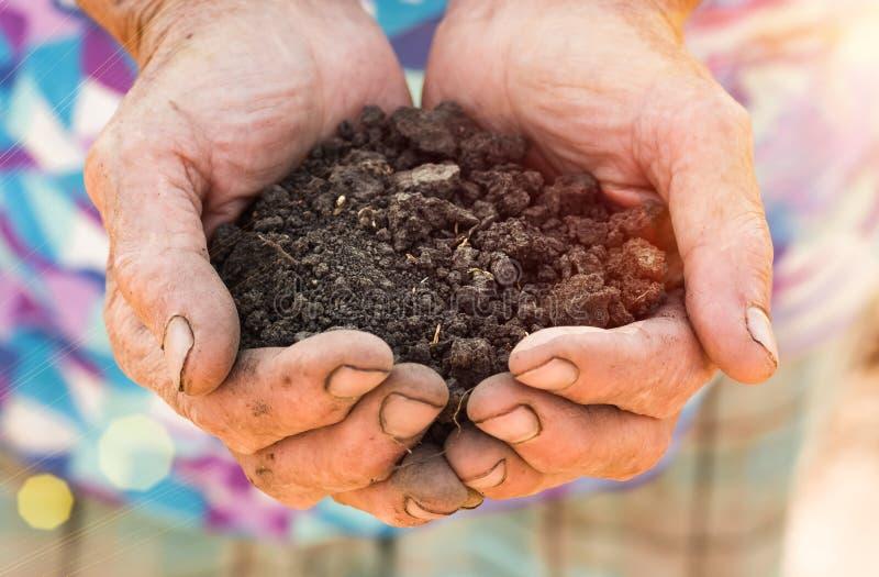 Old farmer holding pile of arable soil in hands stock images