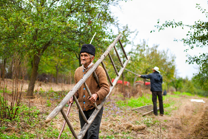 Old farmer with a wooden ladder royalty free stock image