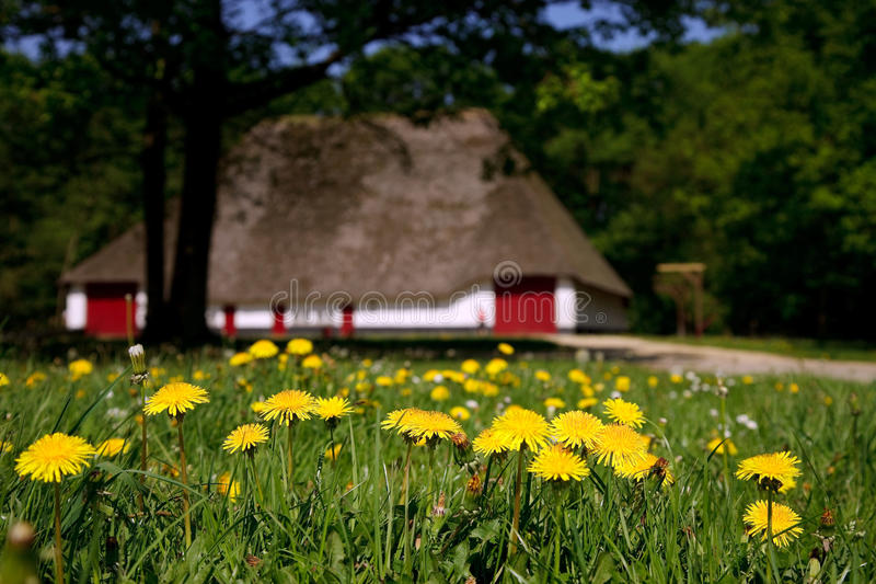 Old farmhous on a sunny day. Old farmhouse on a sunny day in rural belgium, surrounded with trees. Blooming dandelions in foreground. shallow depth of field royalty free stock photos