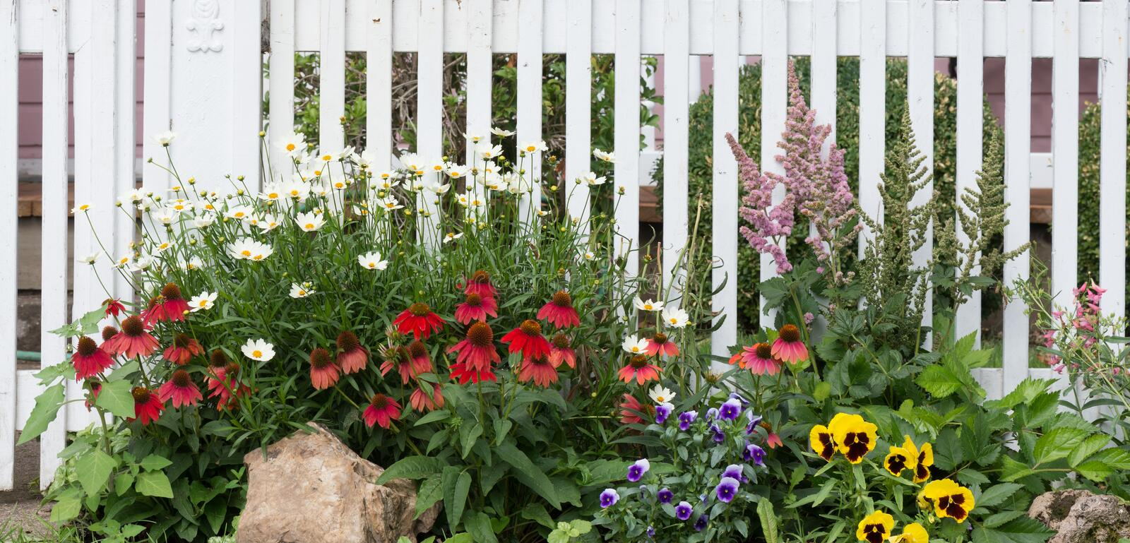 Old Fashioned Garden Fence. A jumble of daisies, red coneflowers, violas, astilbes, and yellow pansies in front of an old fashioned white wooden fence stock photo