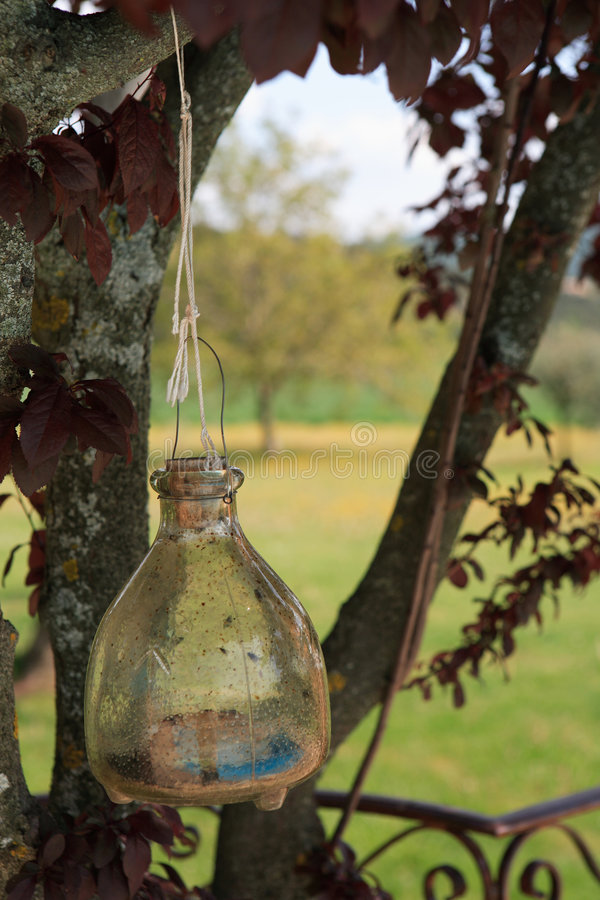 Old fashioned wasp trap royalty free stock image