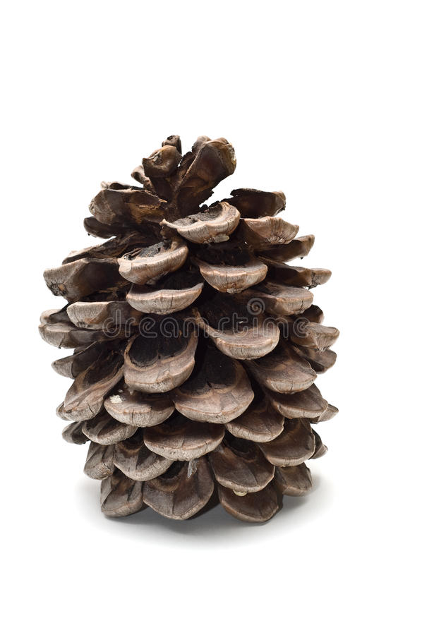 Download Old fat pine cone stock image. Image of brown, open, culture - 10349791