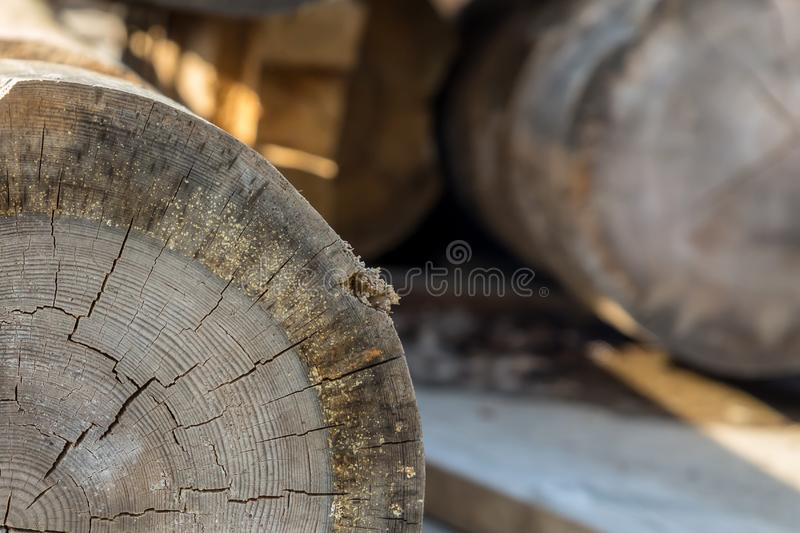 Old felled beam light gray annual ring cracked wood sawmill part of the trunk close-up stock image