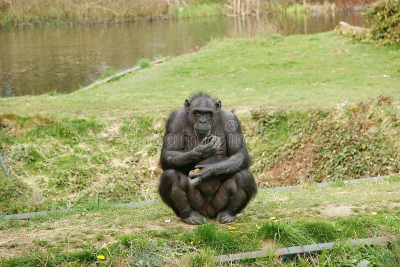 Monkey look stock image