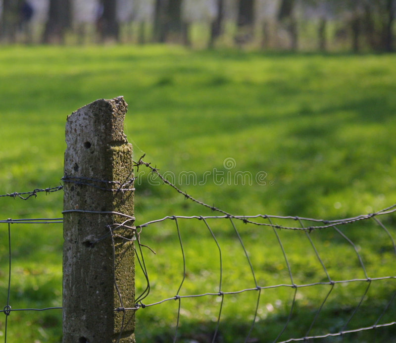 Download Old Fence stock image. Image of forest, barbwire, wire - 113039