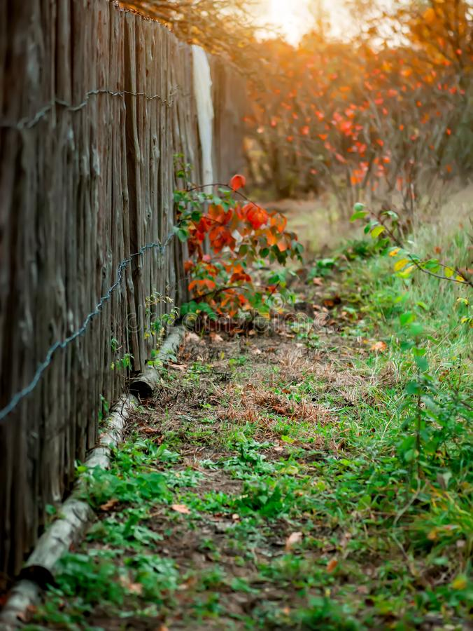Free Old Fence Background For Photography Vertical Blurred Stock Photography - 164194812