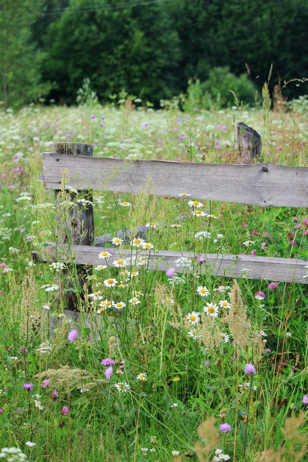 An old fence in meadow in Russian countryside. Blossoming meadow in the middle of summer season in Russian coutryside royalty free stock photos