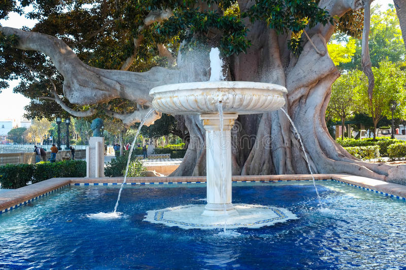 Old ficus in Cadiz. Old ficus and fountain in Cadiz, Andalucia, Spain stock photography