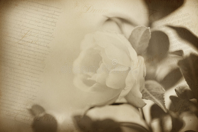 Old flower paper texture background royalty free stock image