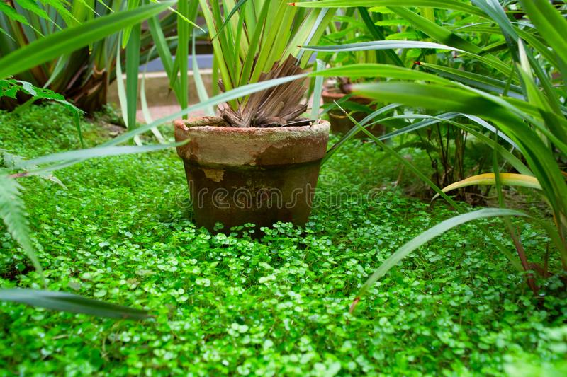 Old flower pot with green plant in green nature royalty free stock photos