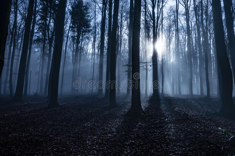 An old foggy forest - autumn. Season stock images