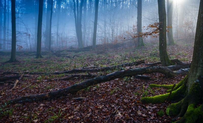 An old foggy forest - autumn. Season stock photo
