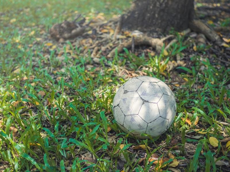Old football. Or soccor ball on grass under the tree stock photo