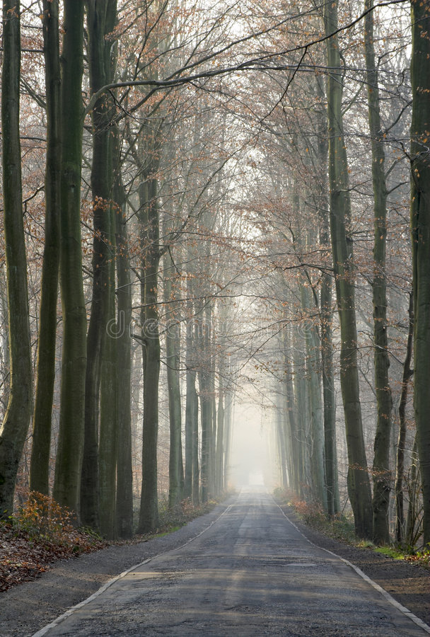 Download Old Forest Road In The Winter Stock Image - Image of branches, pathway: 1224595