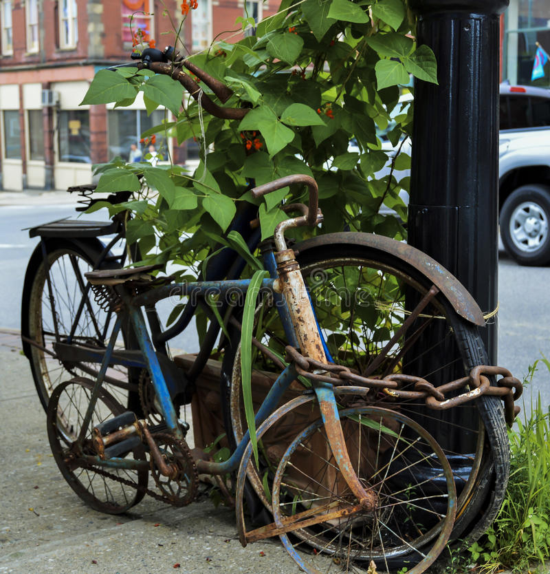 Old Forgotten Bikes Chained Up. Rusted adult and child's retro bicycles are chained up around a light pole on a sidewalk in Belfast, Maine. Vines grow around royalty free stock image