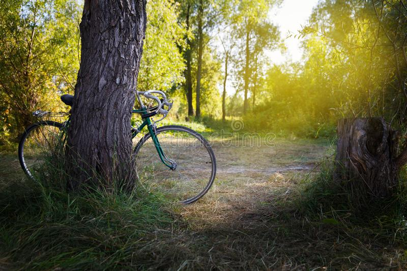 Old green sport bike in the forest royalty free stock image